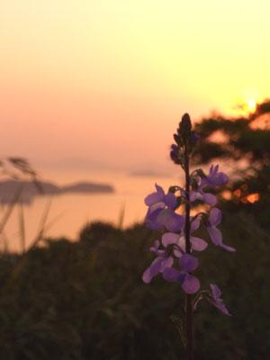 三百山に咲く花