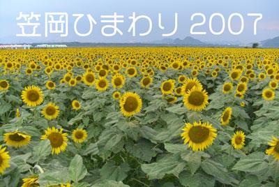 笠岡ひまわり2007