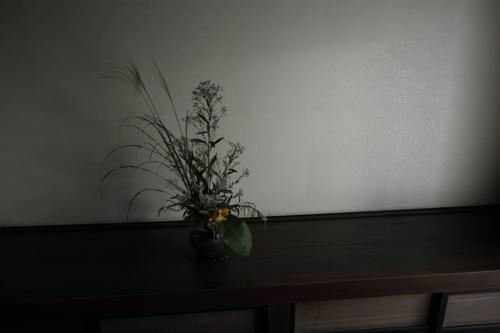 桃太郎ぶどう【大福】桃太郎ぶどう