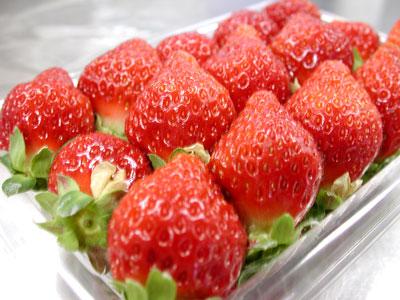 新鮮ないちご/苺