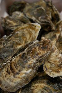 久美浜の牡蠣