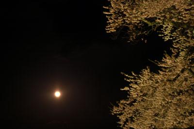 醍醐桜ライトアップ