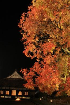 閑谷学校櫂の木ライトアップ