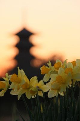 とある日の春