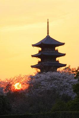 国分寺の夜桜