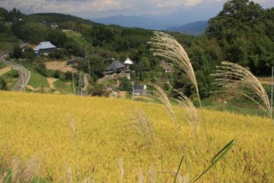 はさがけもち米の生産地、棚田の風景