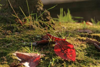 瀬戸内の紅葉と夕日