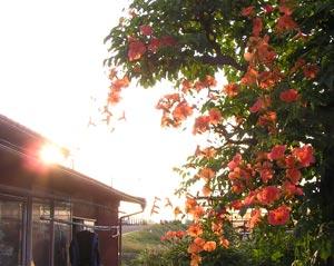 朝日を浴びる庭花